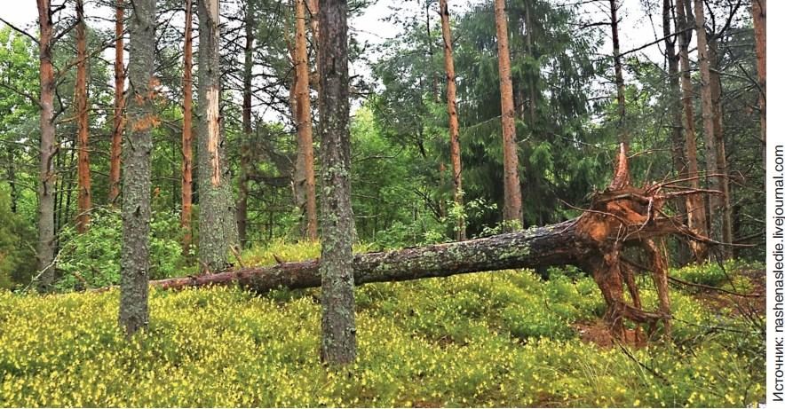казалось Ук рф незаконная рубка лесных насаждений тело
